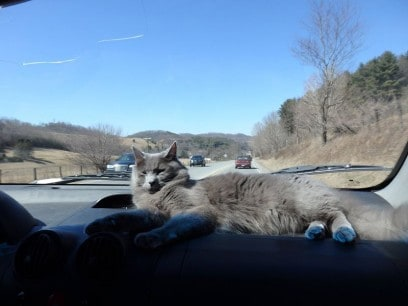 10 Steps Safe Travel with Cats in Cars | Fluffy Kitty