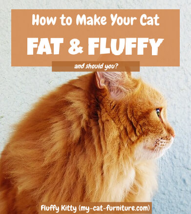 How to Make Your Cat Fat and Fluffy | Fluffy Kitty