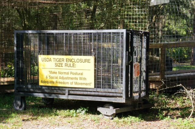 Big Cat Rescue Review by Fluffy Kitty
