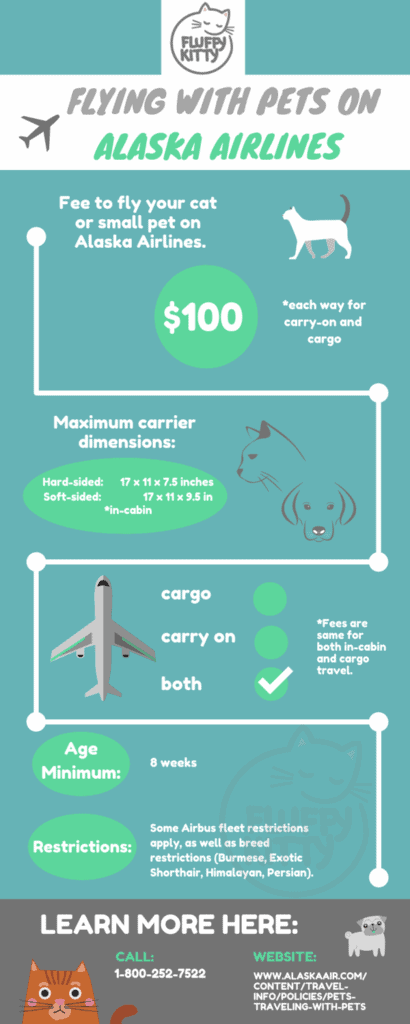 Best Airlines for Cats by Fluffy Kitty | Best Airline for Traveling with Cats