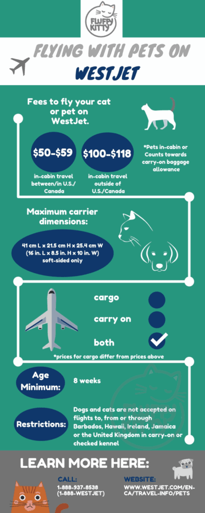WestJet Pet Policy | Best Airlines for Cats by Fluffy Kitty