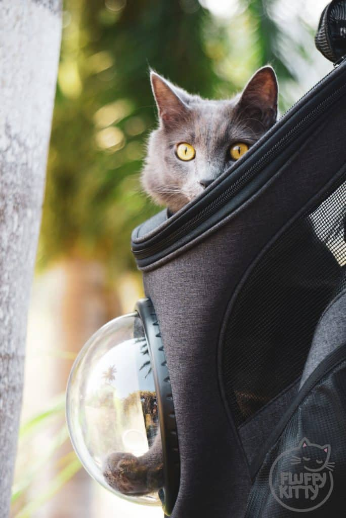 3df91ef0b0 FAT CAT Backpack Review (A True Traveler's Cat Backpack!) - Fluffy Kitty