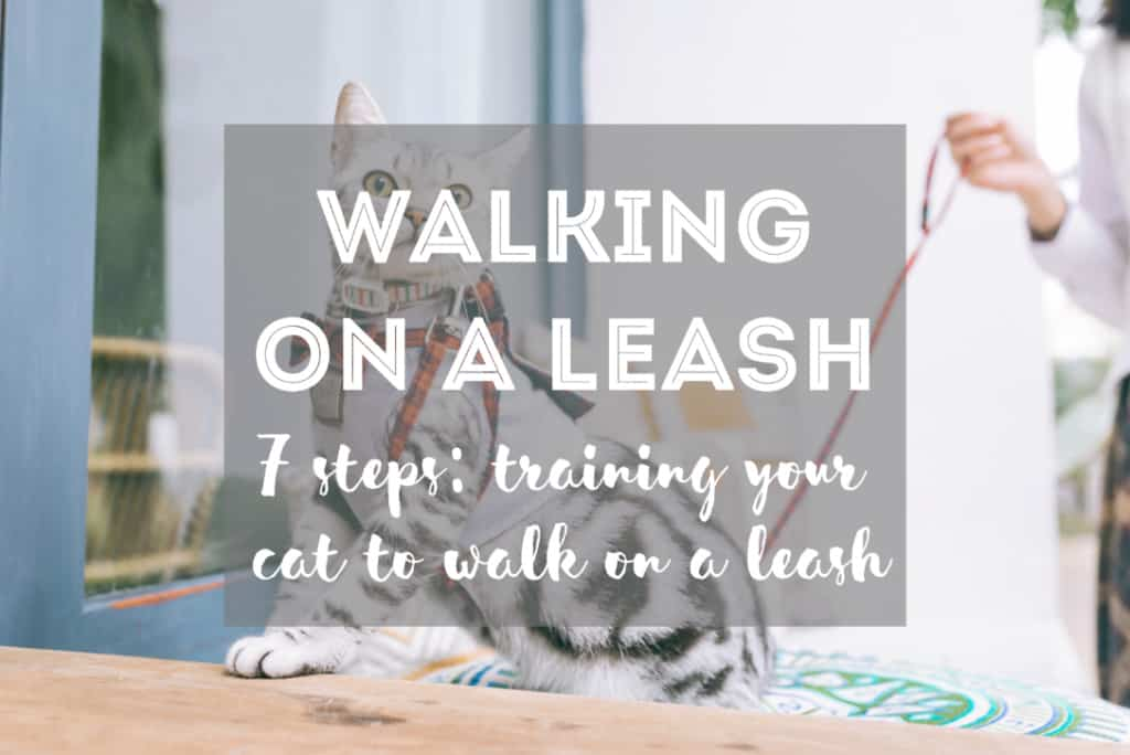 How to Walk a Cat on a Leash in 7 Steps | Fluffy Kitty