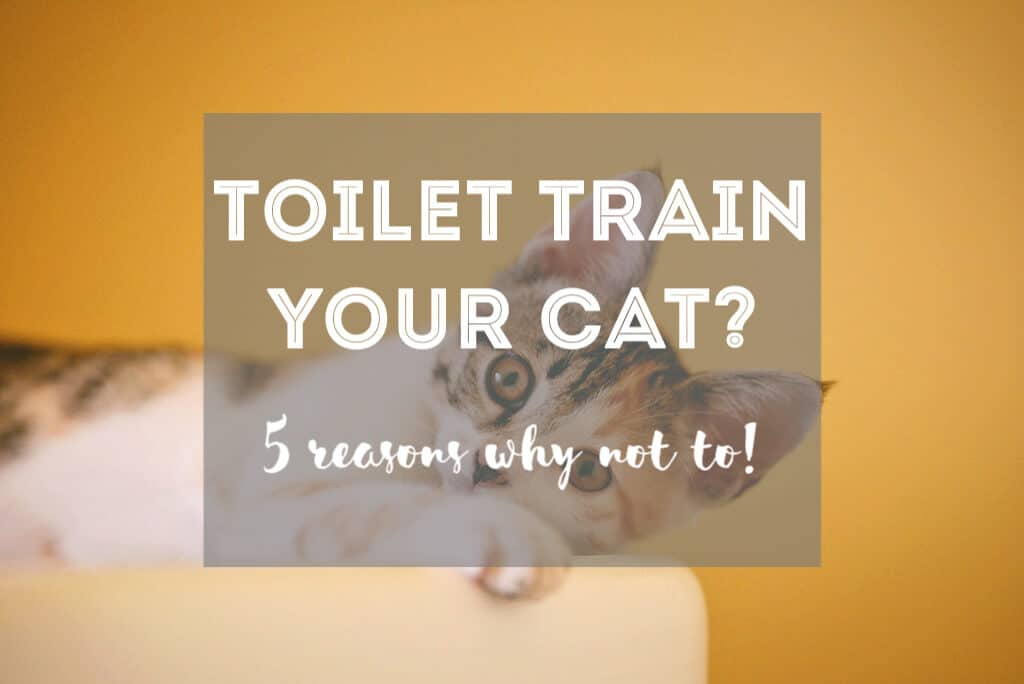 5 Reasons Why You Shouldn't Toilet Train Your Cat | Fluffy Kitty thefluffykitty.com