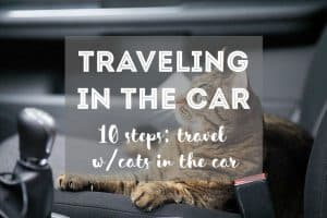 How to Travel with Cats in the Car // Traveling with a Cat in a Car   Fluffy Kitty