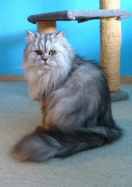Best Cat Furniture | Fluffy Kitty