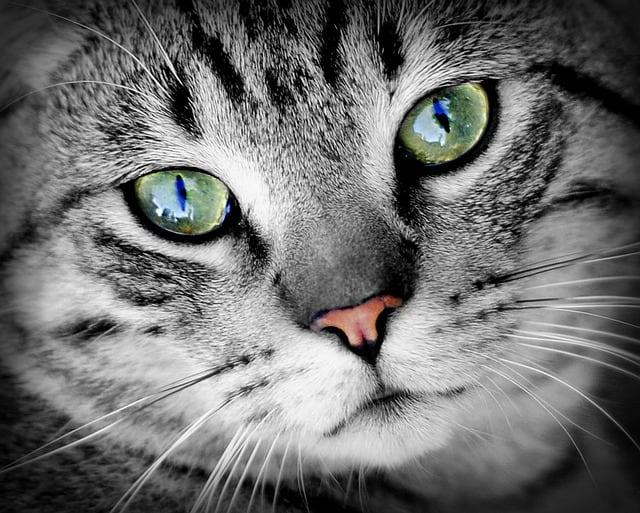 best cat furniture le chat