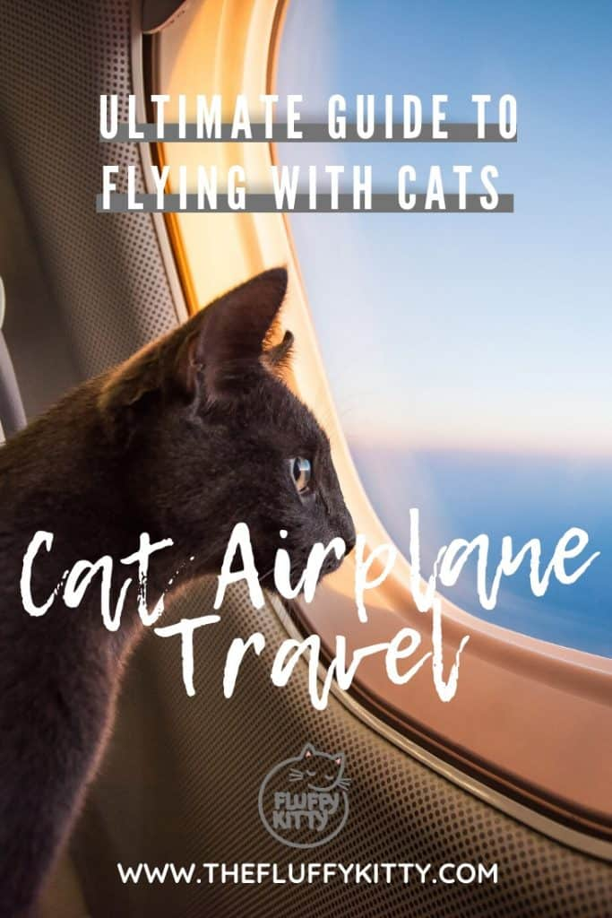 Ultimate Guide to Flying with a Cat - Learn how to fly with your cat in a plane, tips for preparing your cat to travel, packing and preparation tips, and airplane carrier recommendations, and more. Only at THE FLUFFY KITTY www.thefluffykitty.com #cats #pettravel #cattravel #planes #catblog