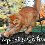 Making Your Own Homemade Cat Food {Guide + Recipes}