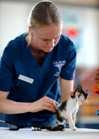 vet to prepare the cat