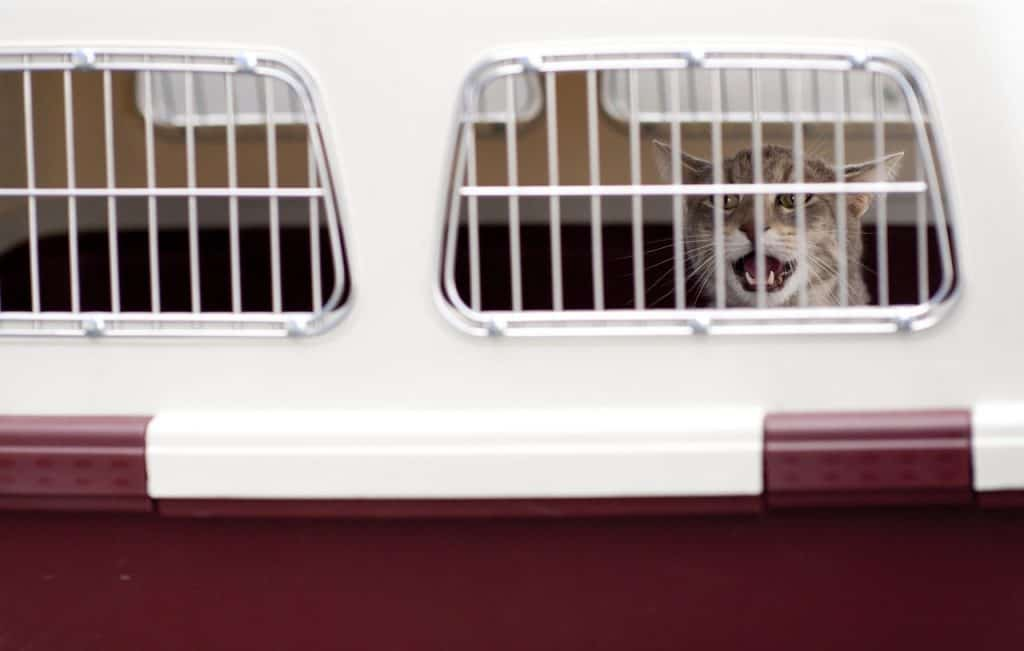 How to Travel with a Cat on a Plane   Fluffy Kitty