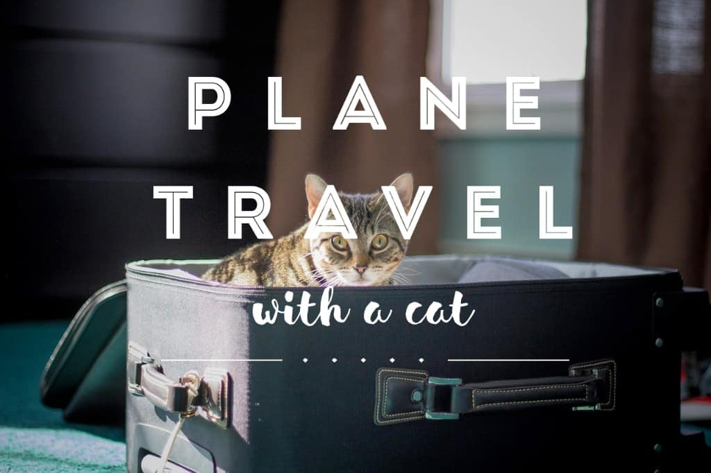 How to Travel with a Cat on a Plane | Fluffy Kitty