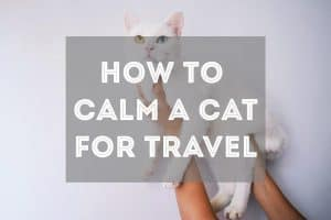 10 Tips for How to Calm a Cat Down for Travel | Fluffy Kitty thefluffykitty.com