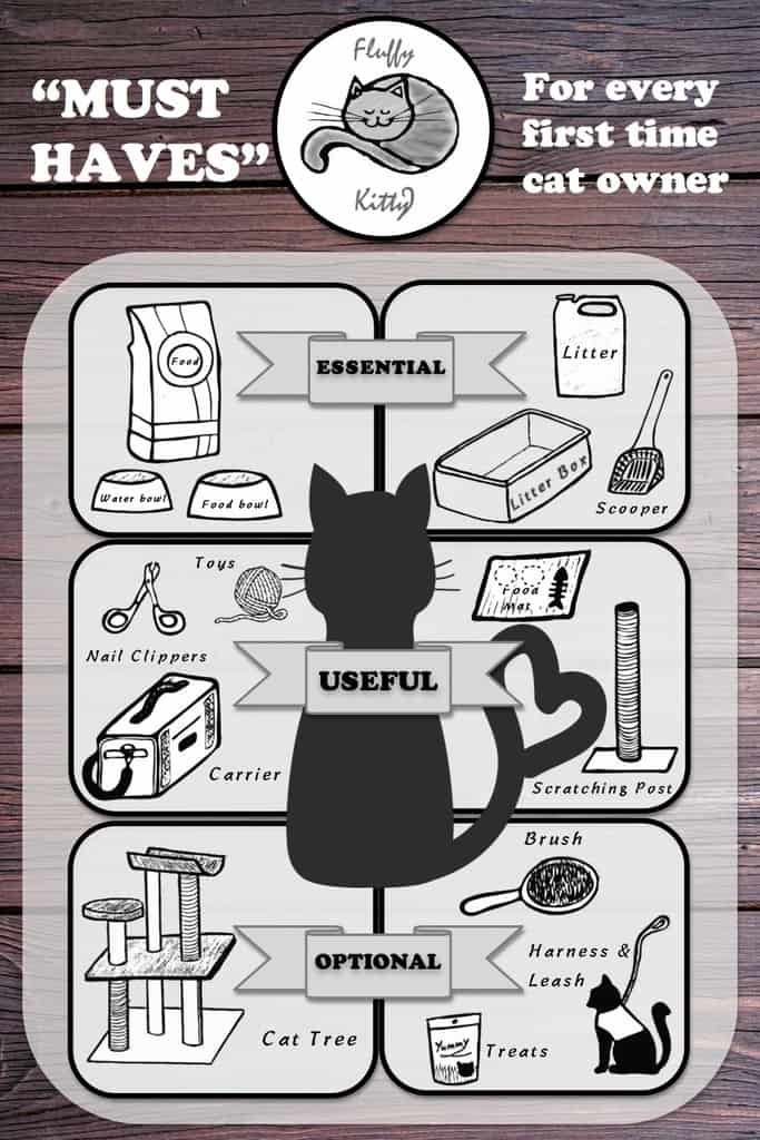 owning a cat for the first time infographics