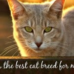 Diabetes in Cats   Ultimate Guide to Feline Diabetes
