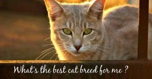 best cat breed for me header