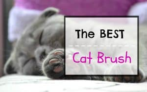 the best cat brush featured image
