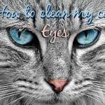 How to Clean My Cat's Teeth | Our Guide