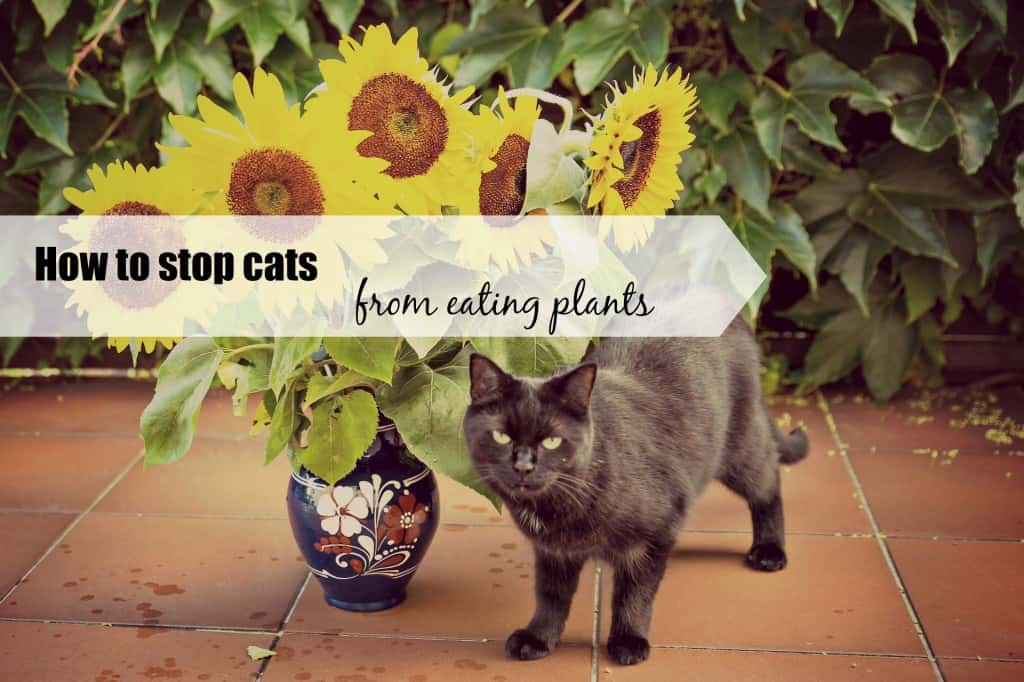 how to stop cats from eating plants header