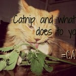 Why do cats eat dirt ?