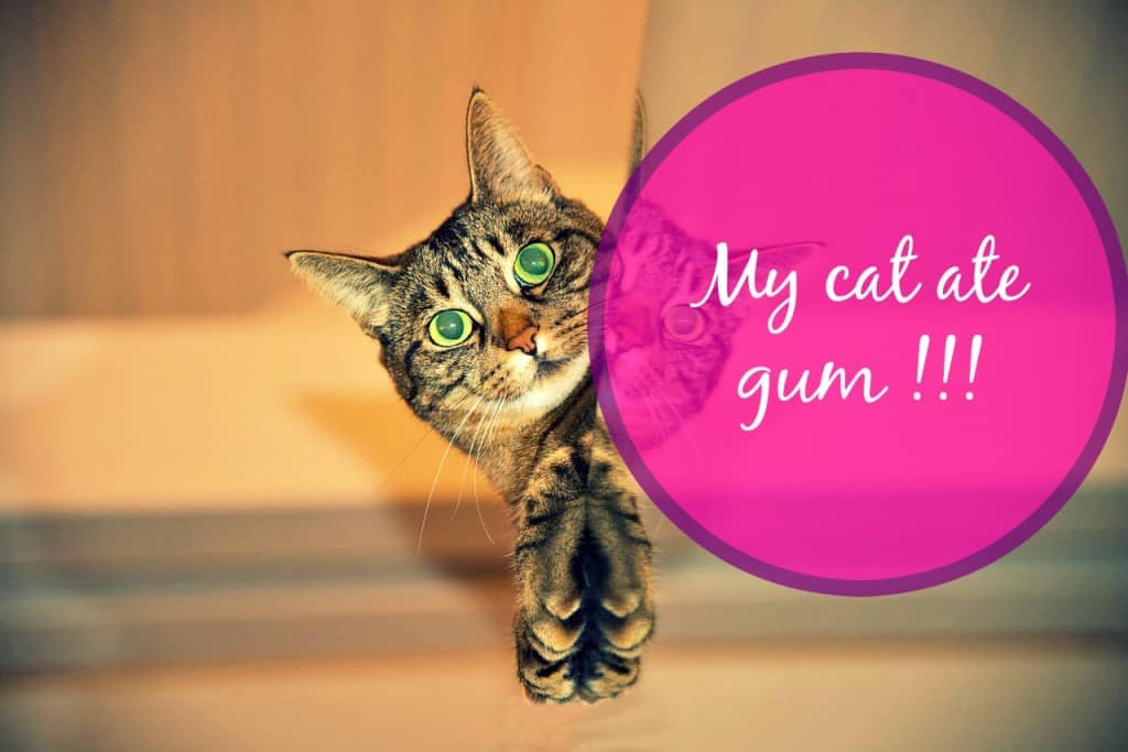 my cat ate gum header