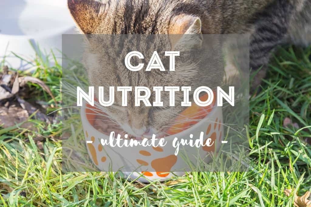 Ultimate Guide to Feline / Cat Nutrition | Fluffy Kitty