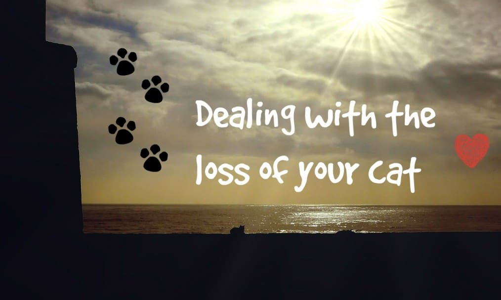 Dealing With The Loss Of A Cat Fluffy Kitty