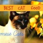 Best Cat Food for Maine Coons