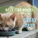 Are Meat By-Products Bad for Your Cats?