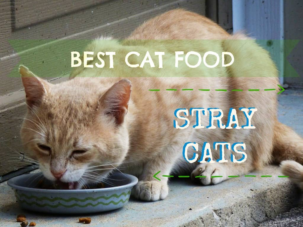 Best Cat Food for Strays