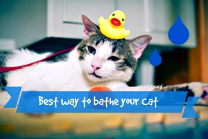 what is the best way to bathe your cat header