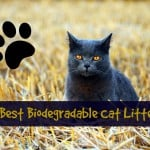 Best Cat Food for British Shorthair {Guide + Reviews}