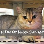 Best Biodegradable Cat Litter Review