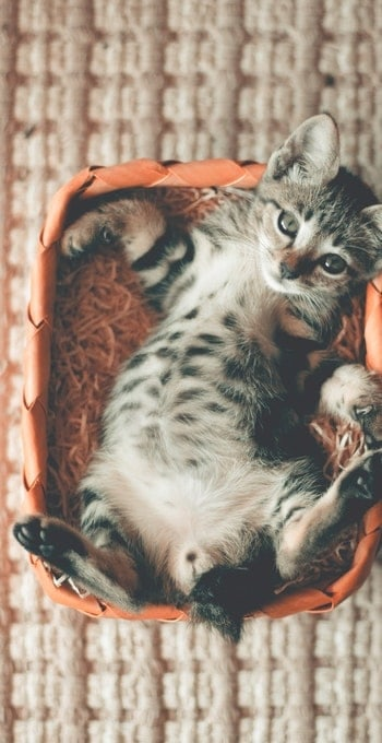 My Cat Had Kittens Can I Move Them ? | Fluffy Kitty