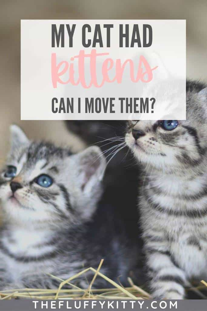 pin my cat had kittens should i move them -the fluffy kitty