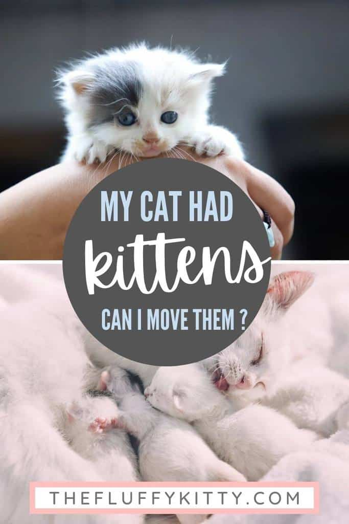pin my cat had kittens what should I do - the fluffy kitty