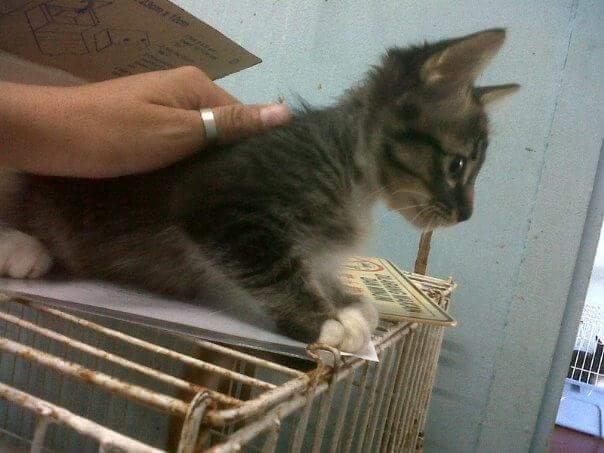 Neko at the shelter