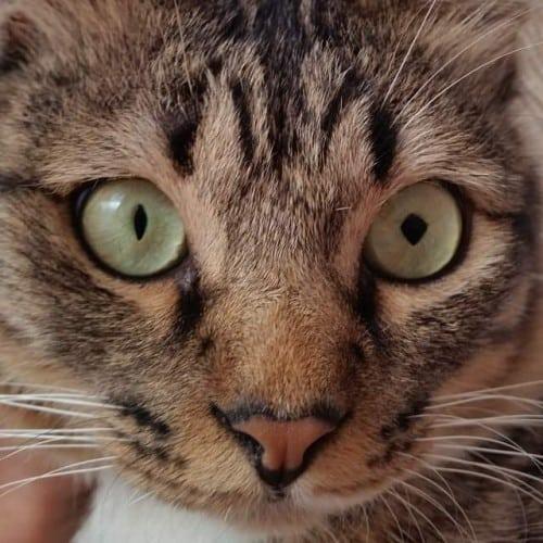 Neko's unique diamond-shaped pupil