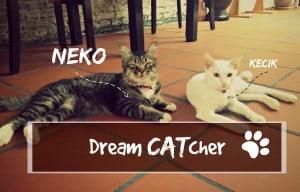 dreamCatcher header