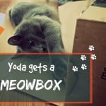 Dream CATcher: The Story of Neko & Kecik | Cat Stories