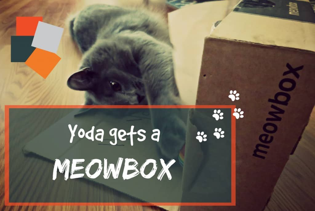 meowmox review header