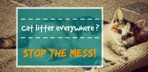 How to stop my cat from tracking litter everywhere header