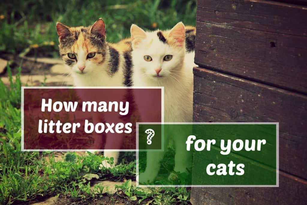 can 2 cats share a litter box header