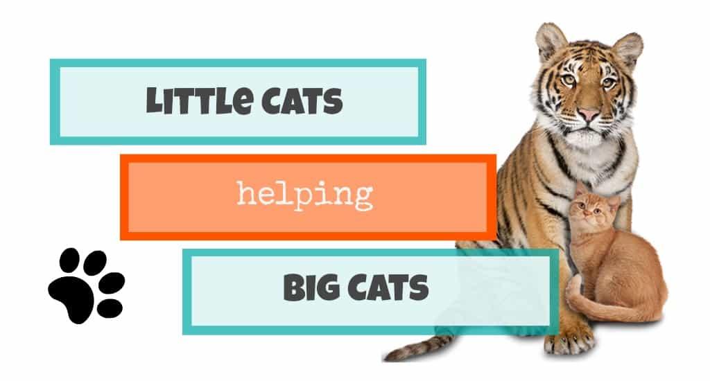 little cats helping big cats header