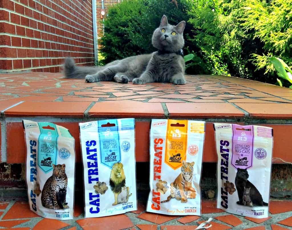 yoda and his treats