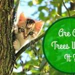 Little Cats Helping Big Cats | Big Cat Rescue
