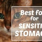 What to Feed a Stray Cat Without Cat Food