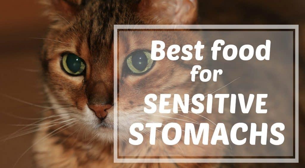 best-food-for-sensitive-stomachs-header