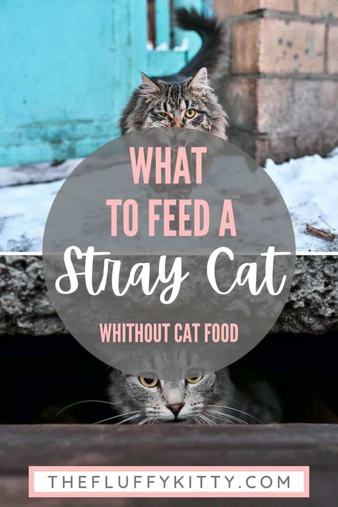 stray cats pins