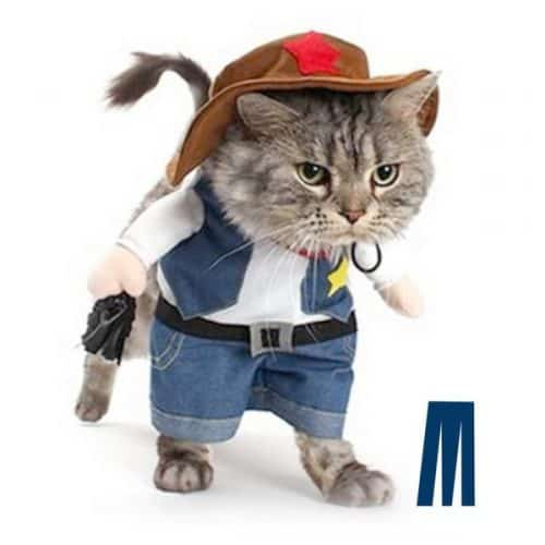 best halloween cat costume cowboy-cat
